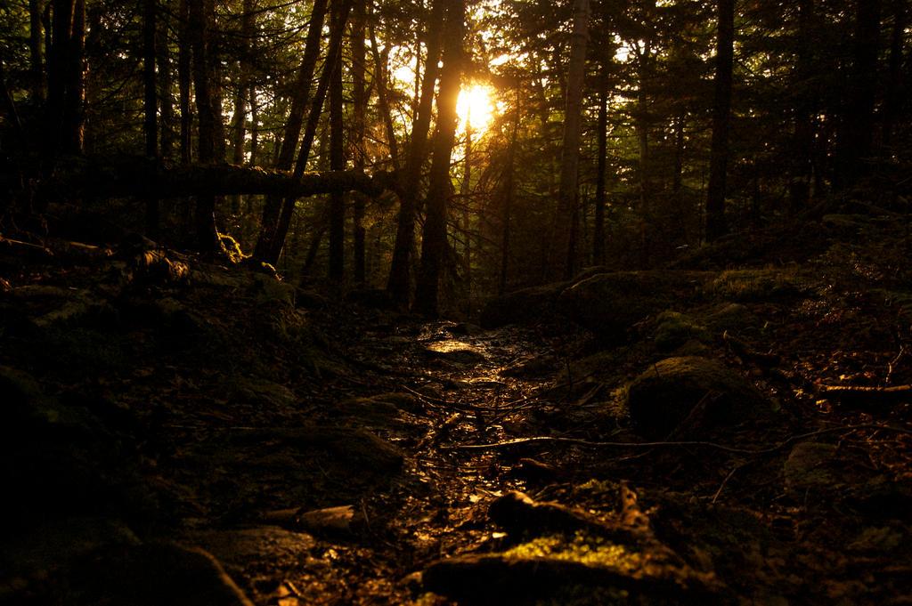 Peeking through the forest by orindamorago