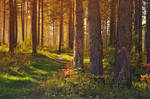 September in the forest by Korolevatumana