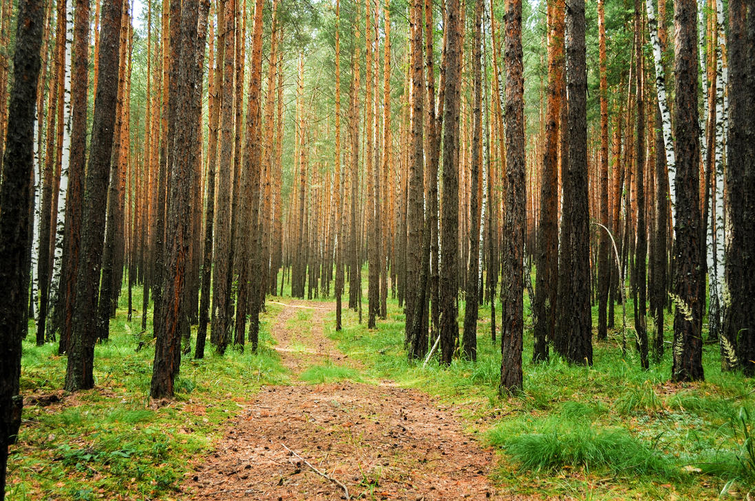 forest landscape by Korolevatumana on DeviantArt
