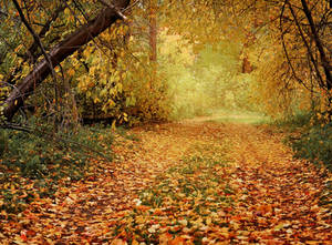 Autumn Path In The Woods