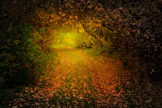 Autumn forest and mysterious path between trees