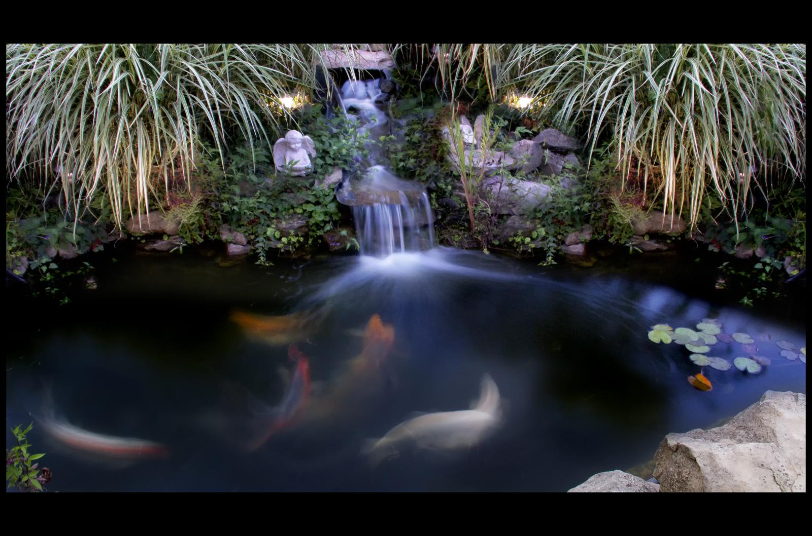 Koi zen by billyrwebb on deviantart for Koi pond zen