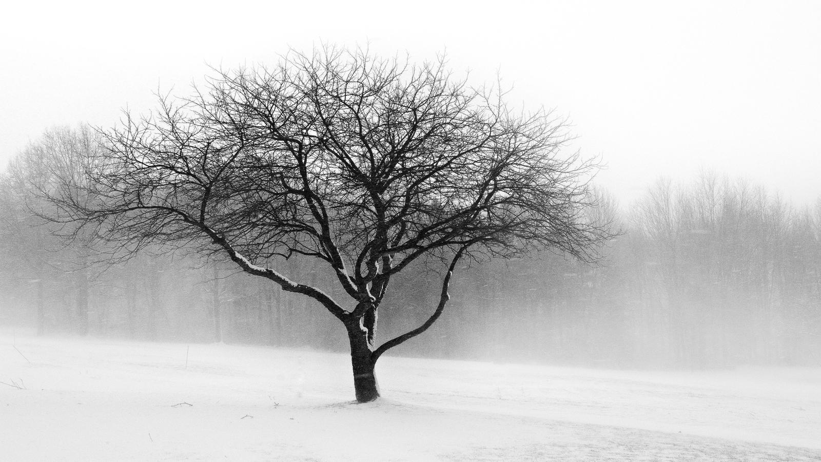 blizzard by BillyRWebb
