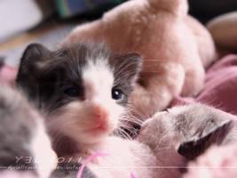 Sweet Little Kittens 14 by ariellemika12