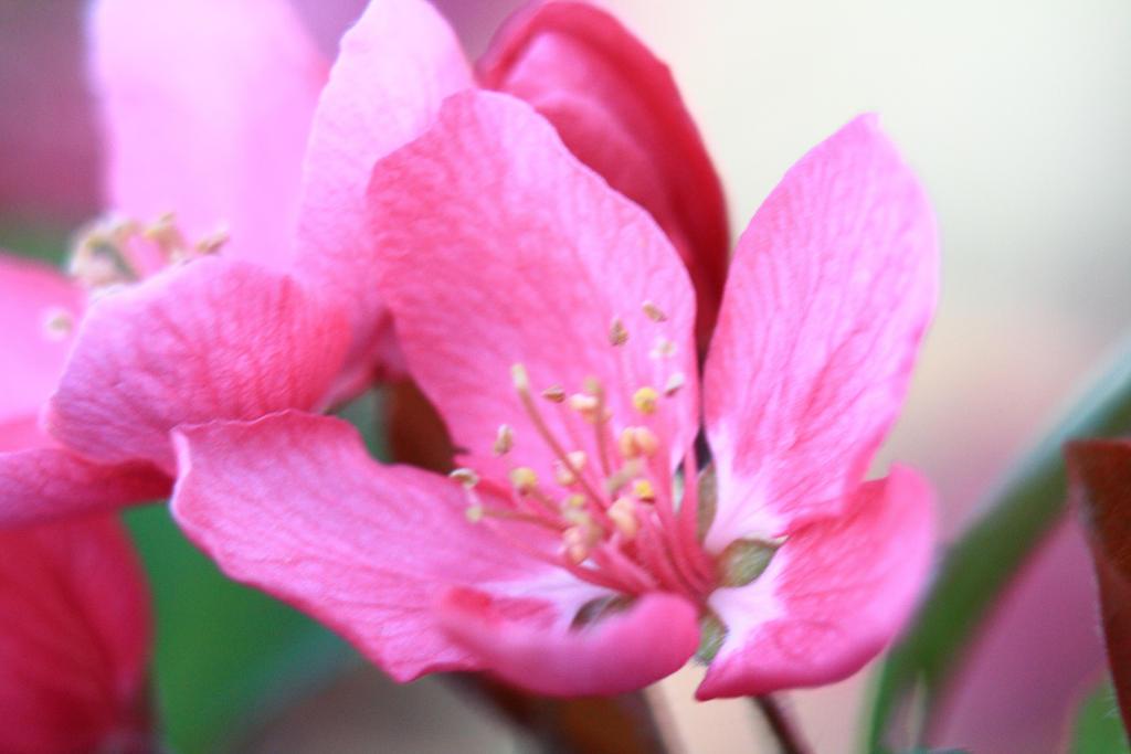 Spring Blossom by GradyArt