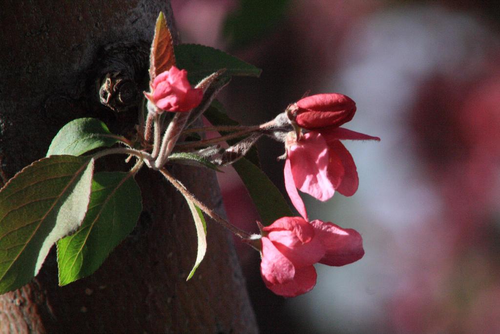 Blossom Buds by GradyArt