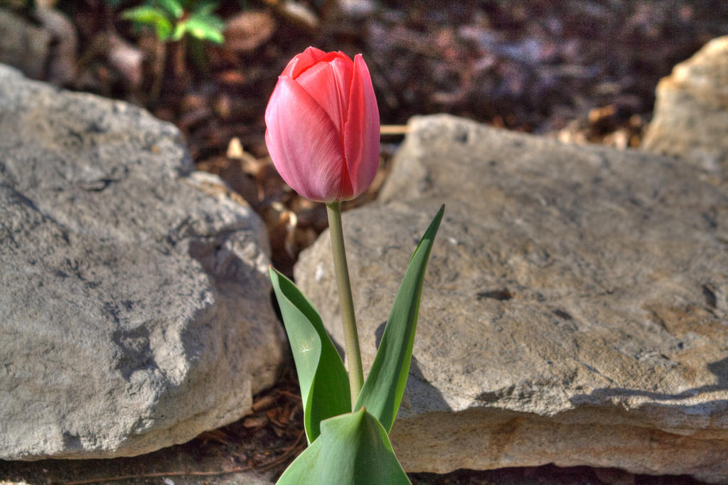 Flower and Stone by GradyArt