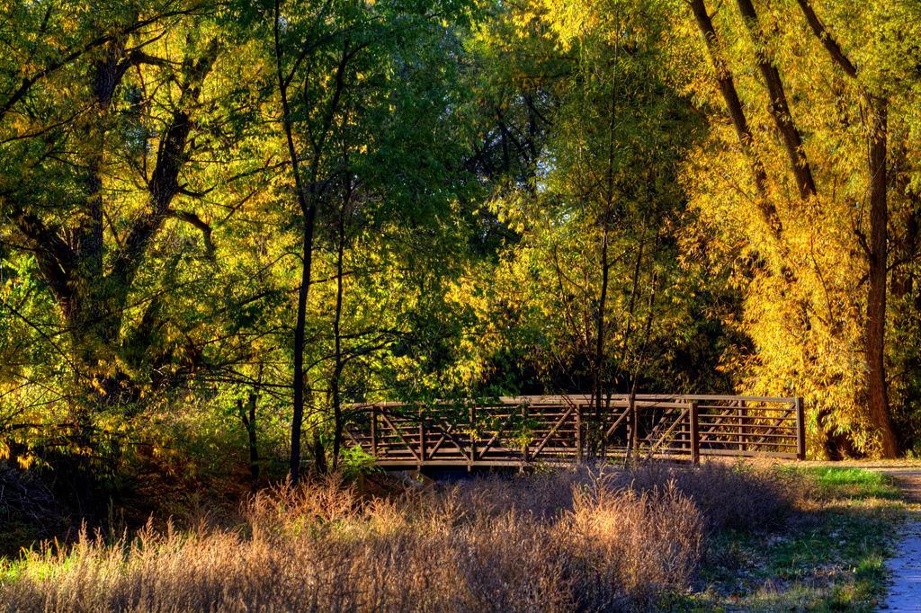 Autumn Scene by GradyArt
