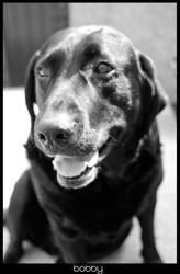 Bobby The Black Lab by Affiliation