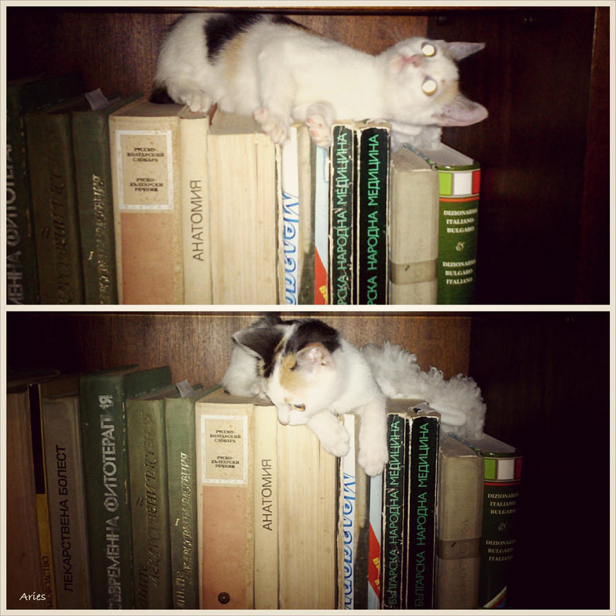 Kitten and books by AriesWildChild