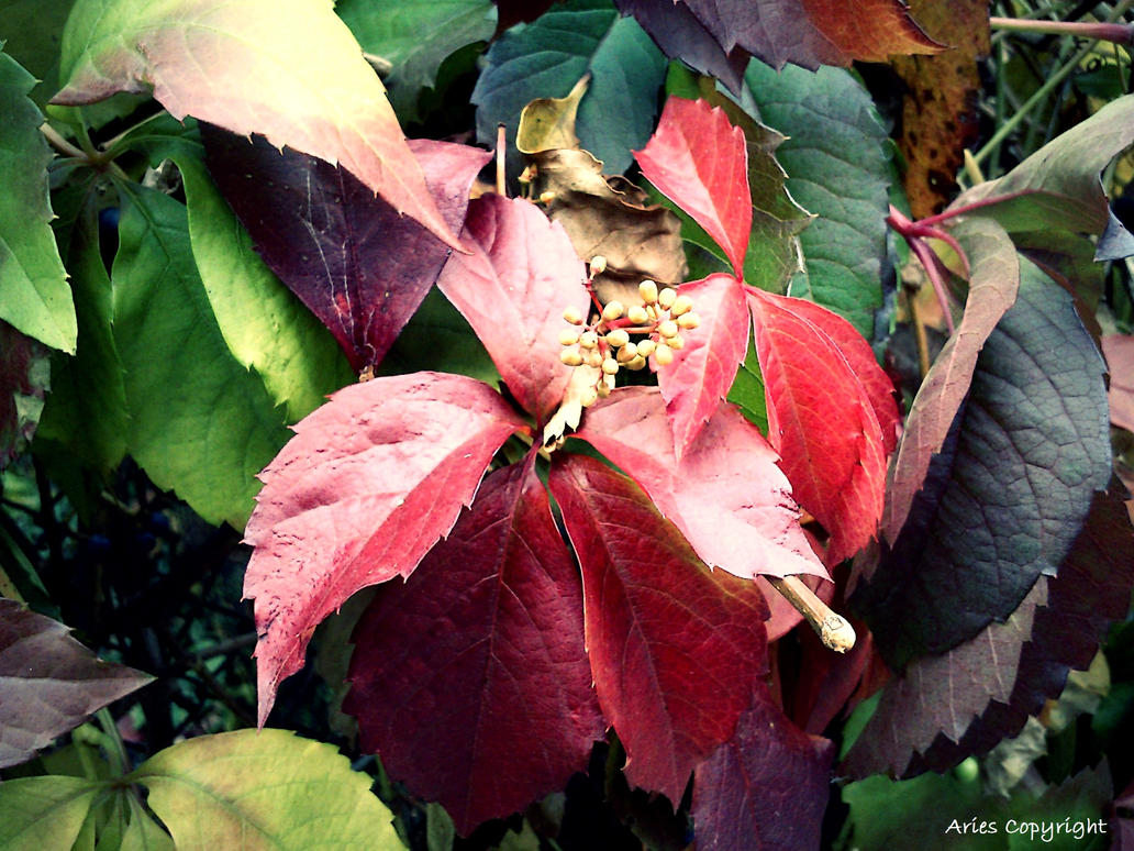 Leaves 2 by AriesWildChild