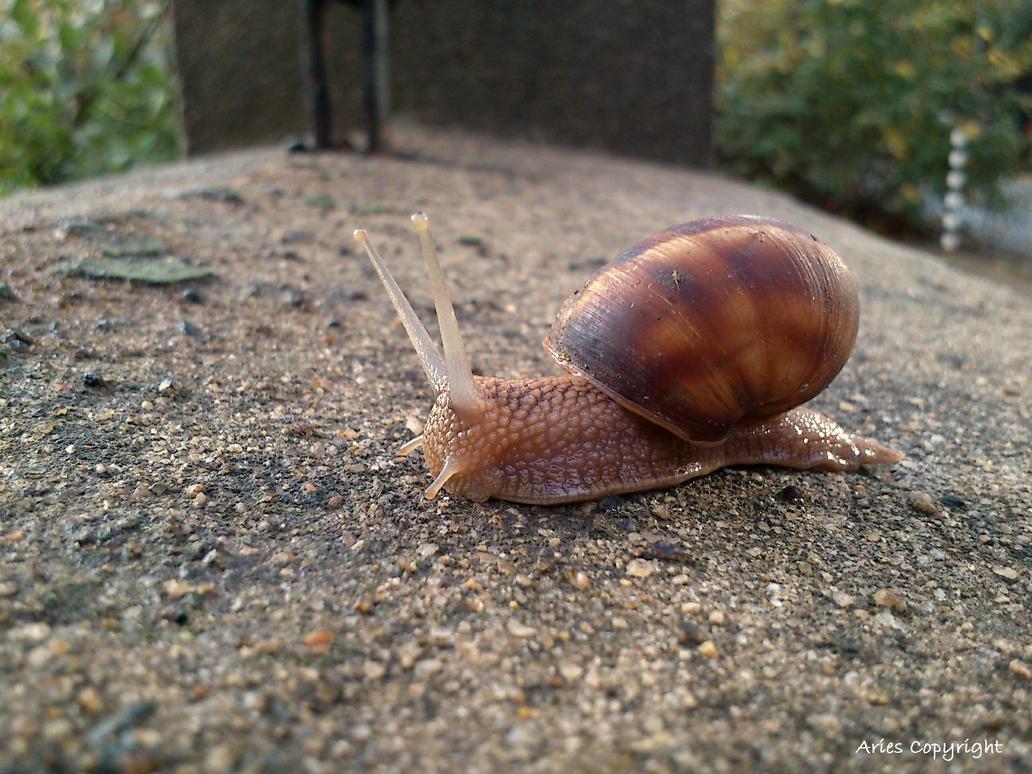 Little Snail by AriesWildChild