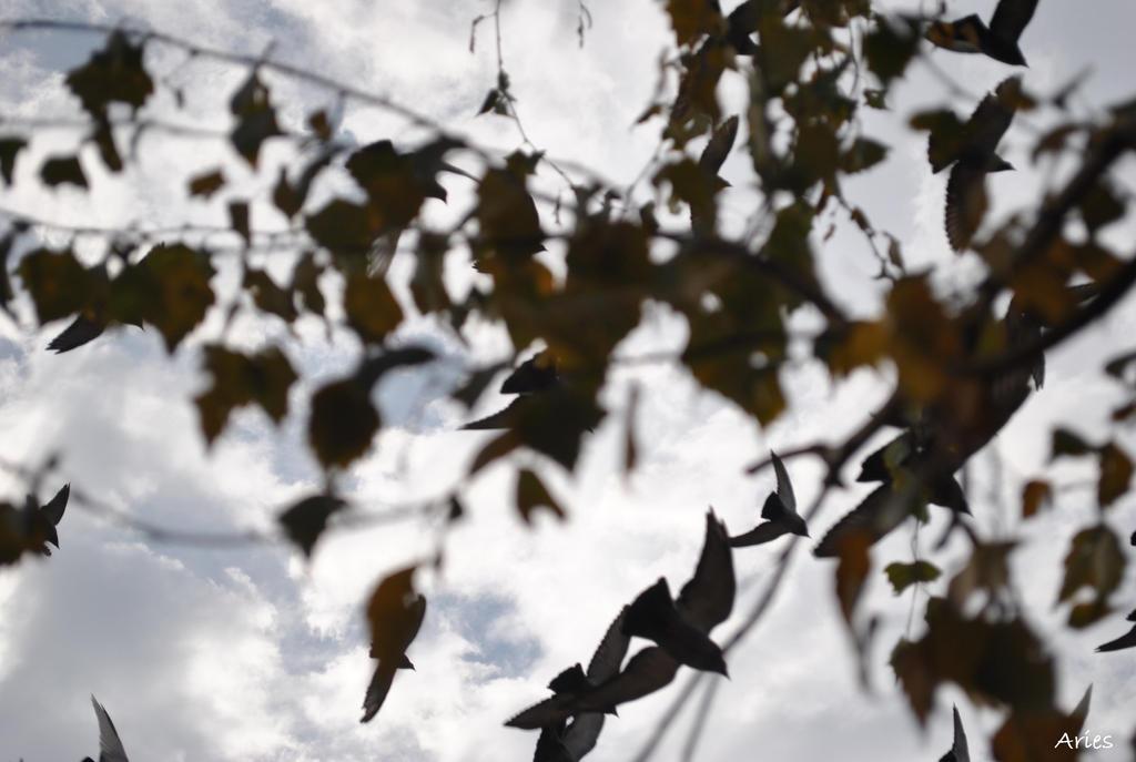 Flying pigeons by AriesWildChild