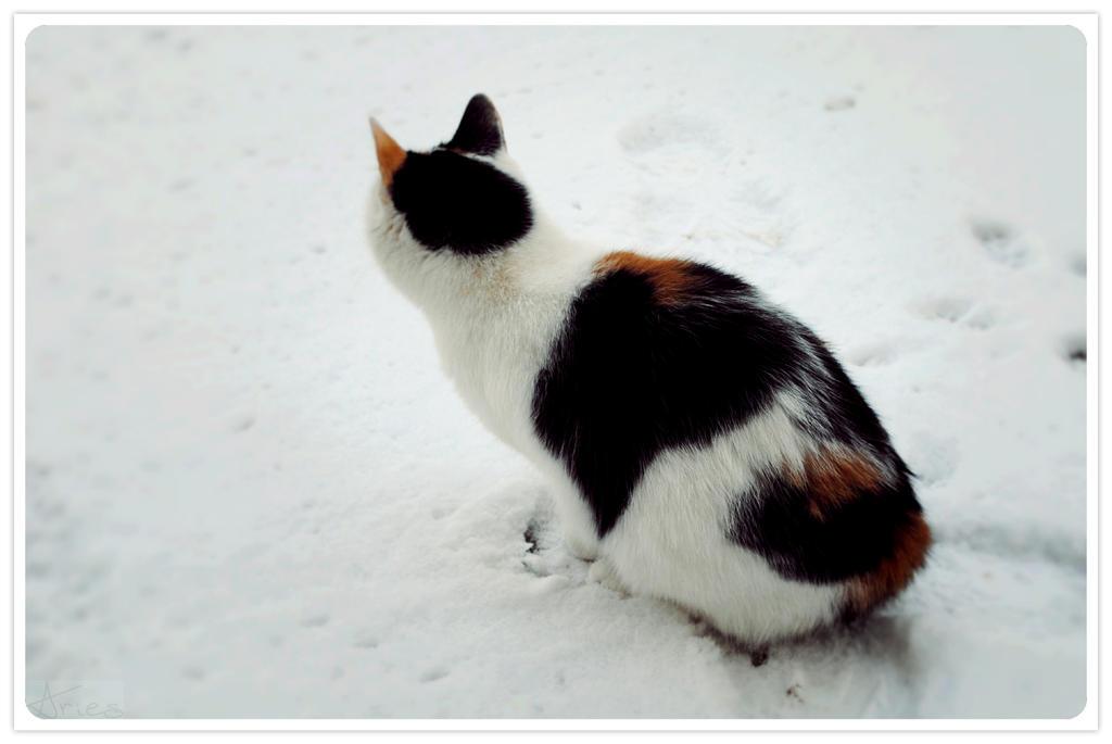 Cat  and snow by AriesWildChild