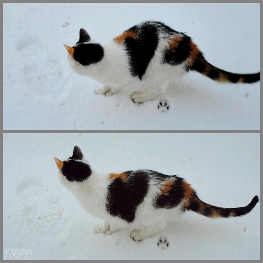 Cat first snow by AriesWildChild