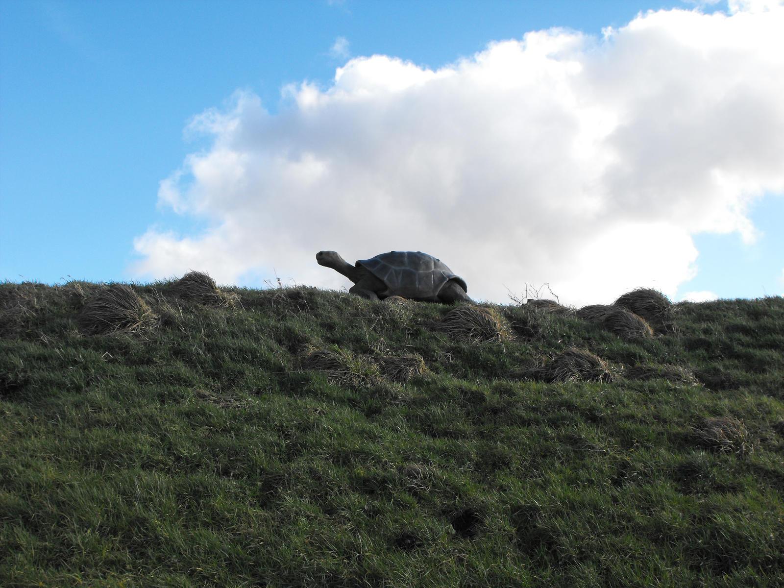 Tortoise in the sky by Julesjustjules