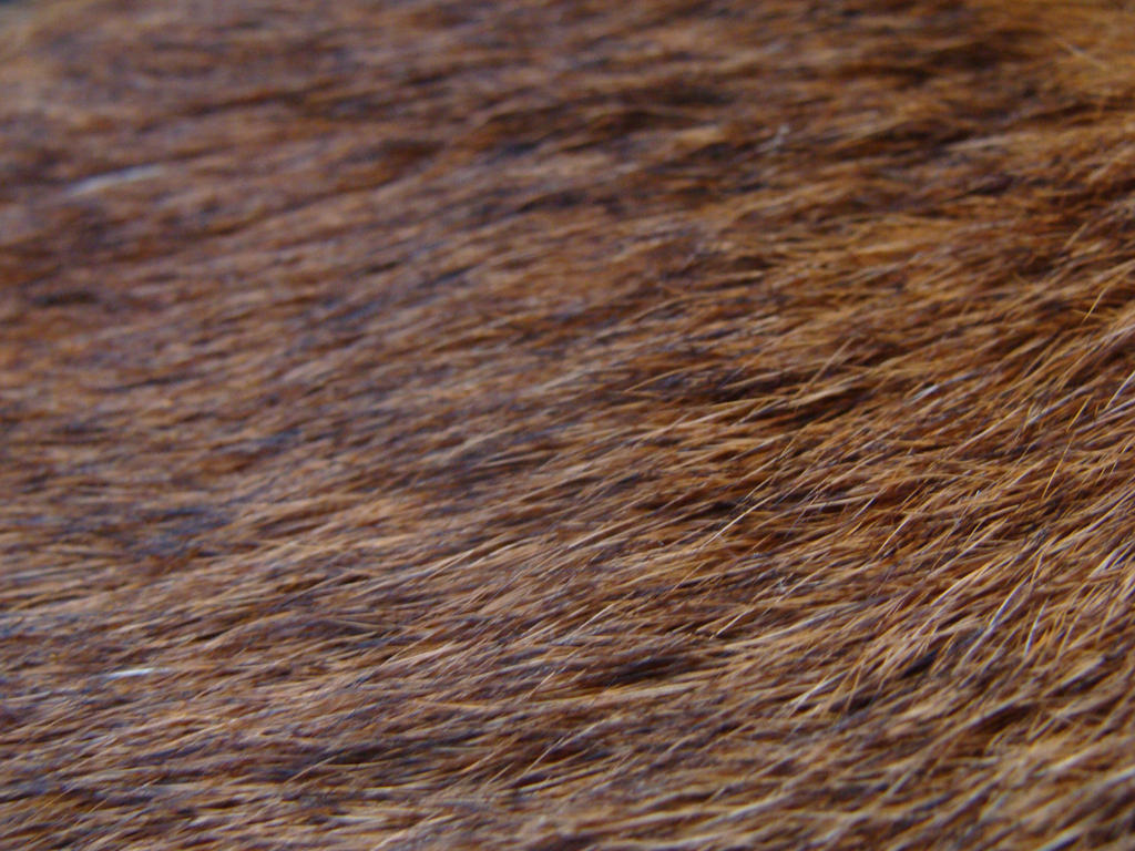 Cougar fur Stock photo by Lot1rthylacine