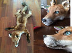 Juvenile fox SOLD