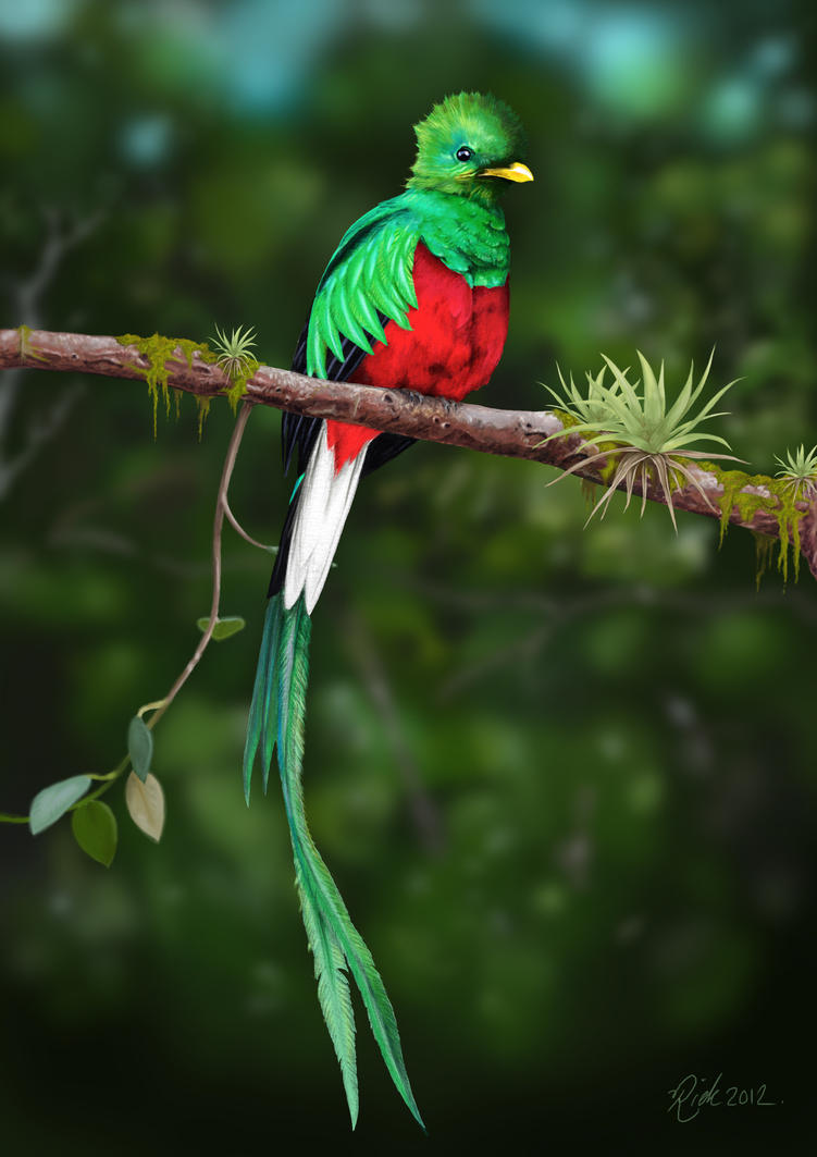 Resplendent Quetzal 2 (Digital Painting) by Rick-Lilley