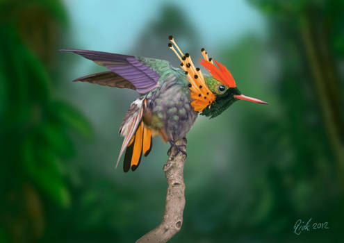 Tufted Coquette Hummingbird (Digital Painting)