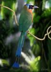 Blue-crowned Motmot (Digital Painting)