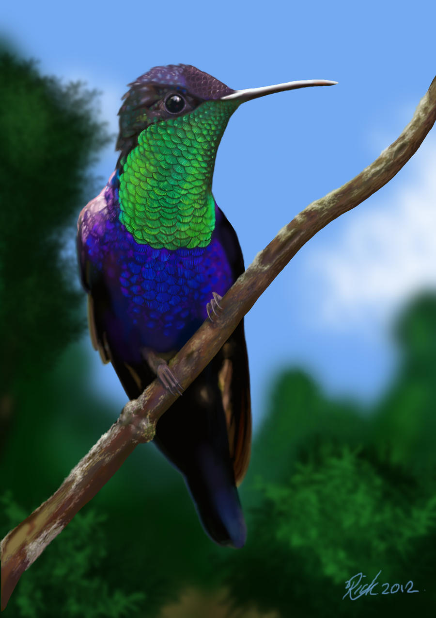 Violet Crowned hummingbird (Digital Painting) by Rick-Lilley