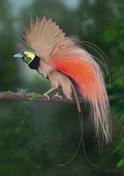 Raggiana Bird of Paradise (Photoshop Painting)