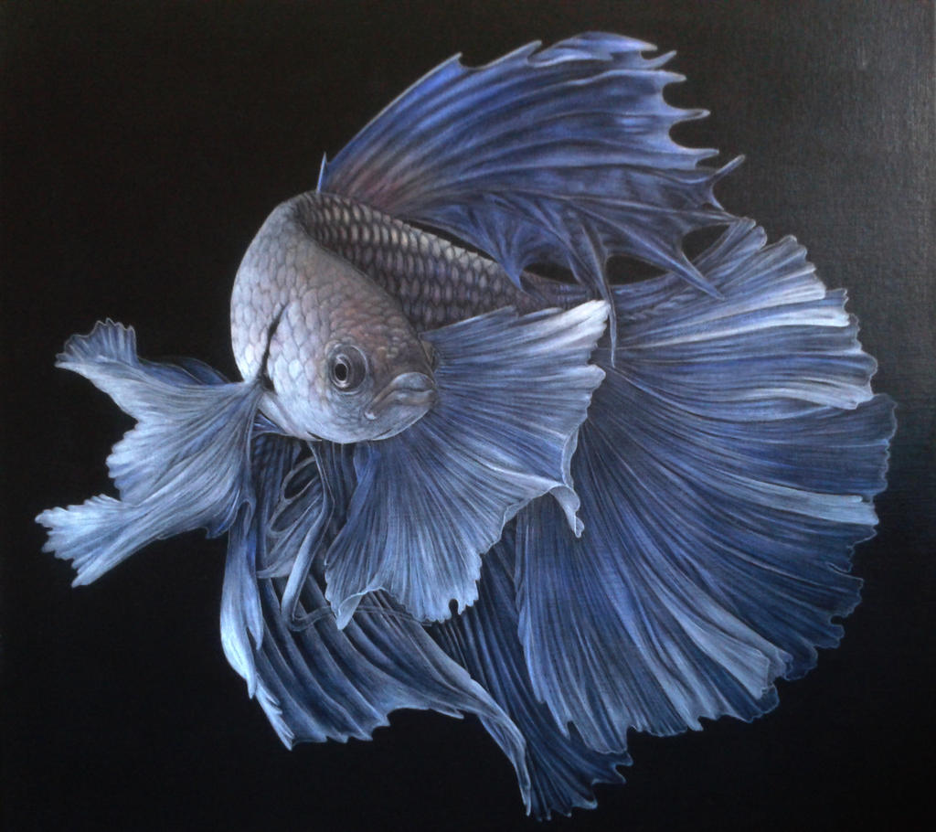 Siamese fighter betta fish acrylic on canvas by rick for Betta fish painting