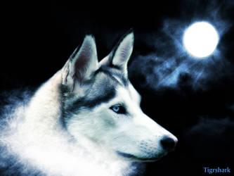 wolf wallpaper by Tigrshark