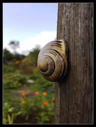 sleeping snail by Genoveva612