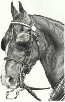 Coach Horse