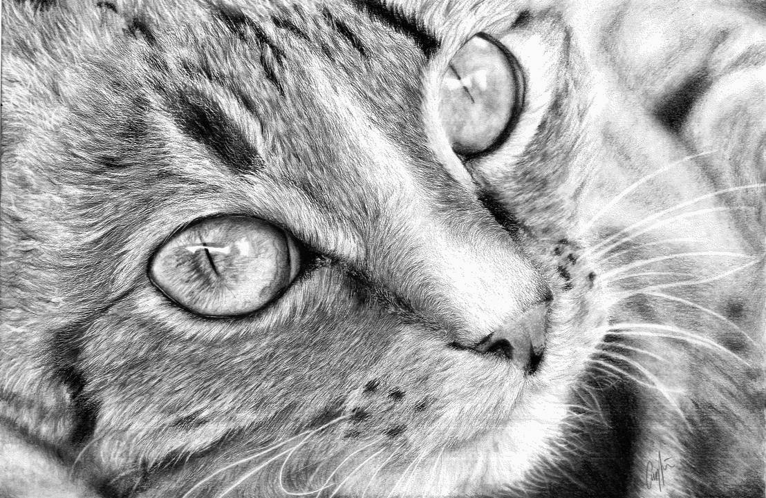 Cat face- Pencil drawing by Pyrcias