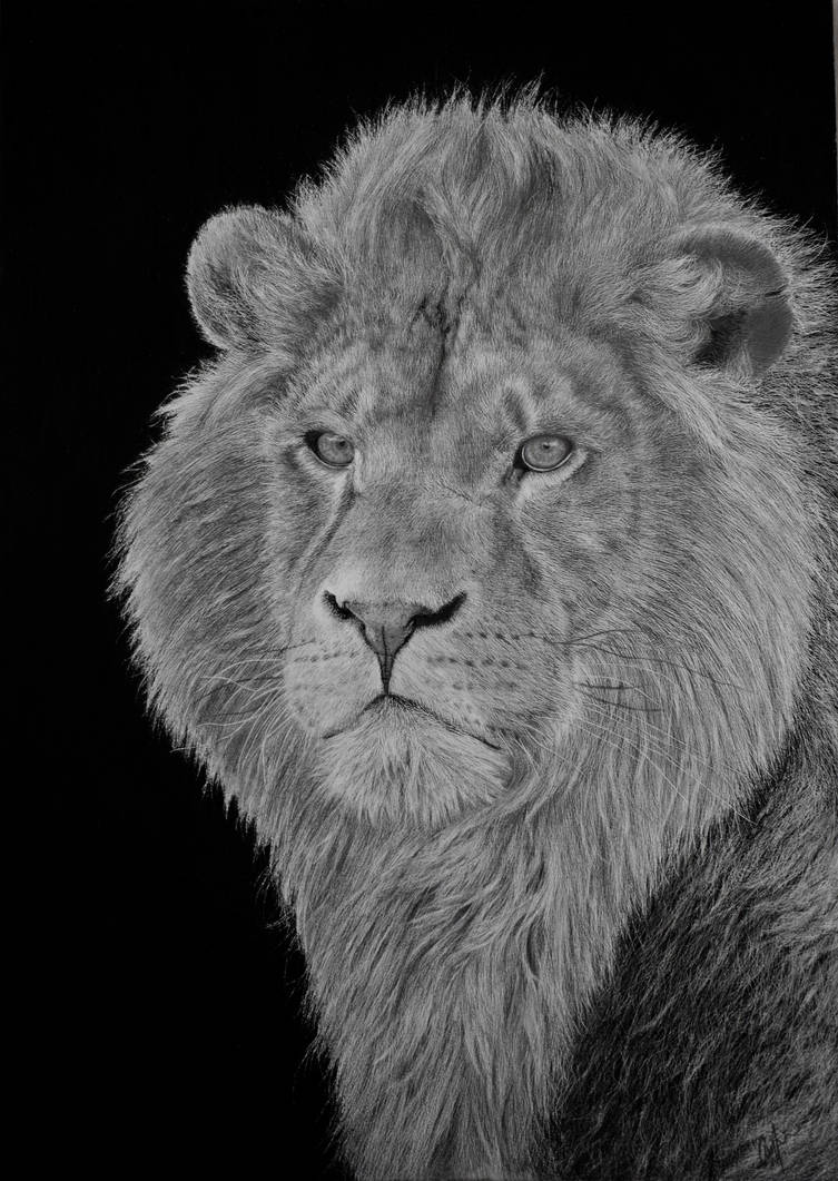 Lion- Pencil drawing by Pyrcias