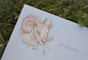 Ram with spring flowers |ColourPencil by CrimsonInside