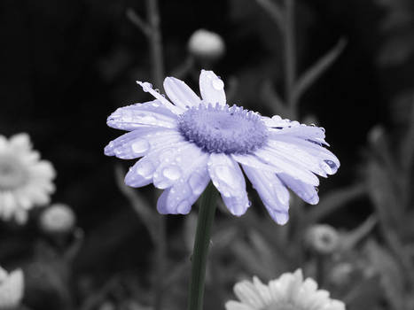 daisy revamped