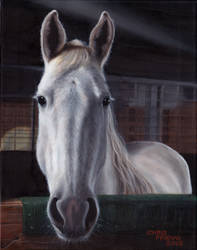 Hank (Commissioned Horse Oil Painting)