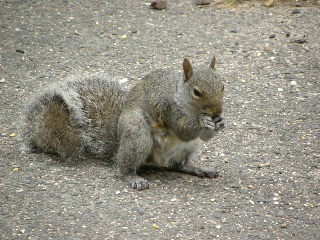 Squirrel having breakfast by Cassini90125