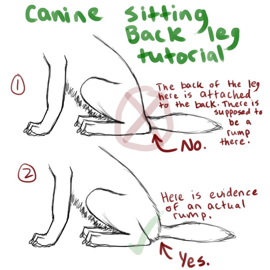 Dorable Canine Head Anatomy Composition - Anatomy Ideas - yunoki.info