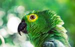 greenish by LyraWhite