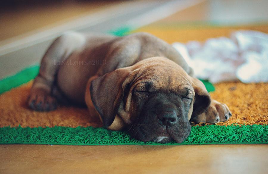 Peaceful Paws Dog Training