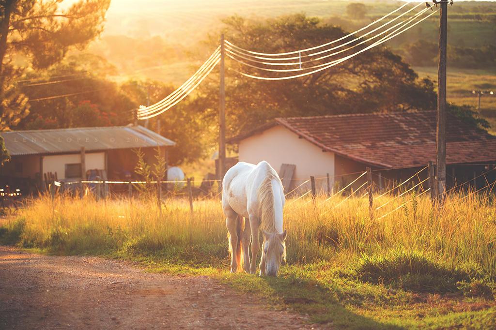 Sunny Fields by LyraWhite