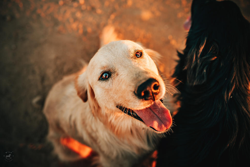 Who's a Good Boy by LyraWhite