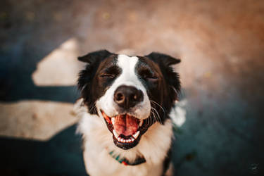Happy pup, happy life by LyraWhite