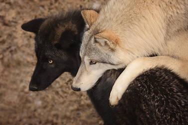 Wolf Hugs by Fall-of-rain