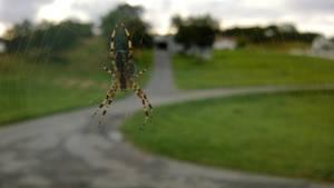 Crawlie the spider