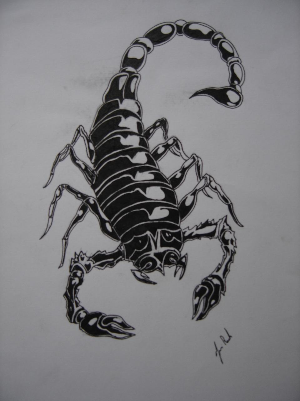 Эскиз тату скорпиона фото
