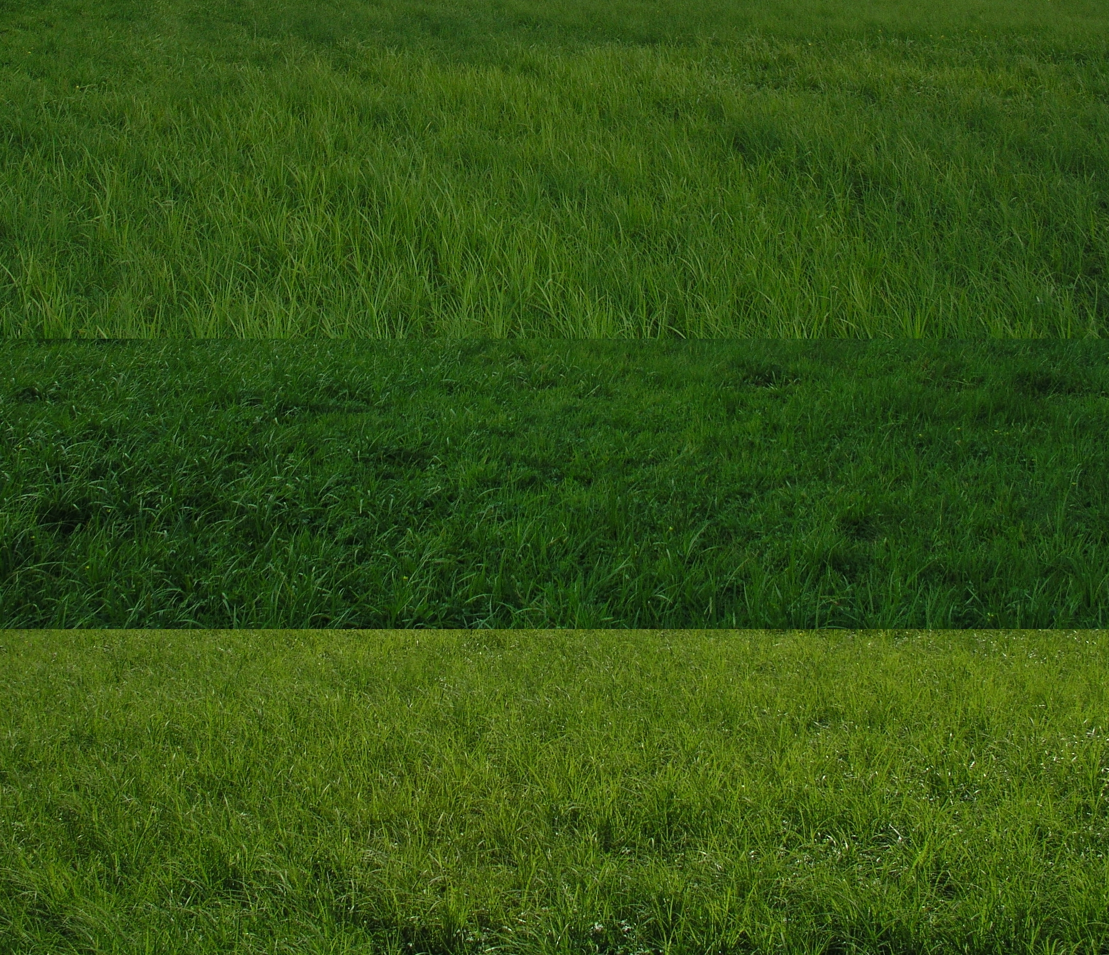 High Resolution Grass Sheet By Sooly On Deviantart