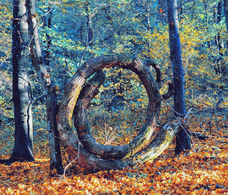 The circle in the woods by Schattenfunke