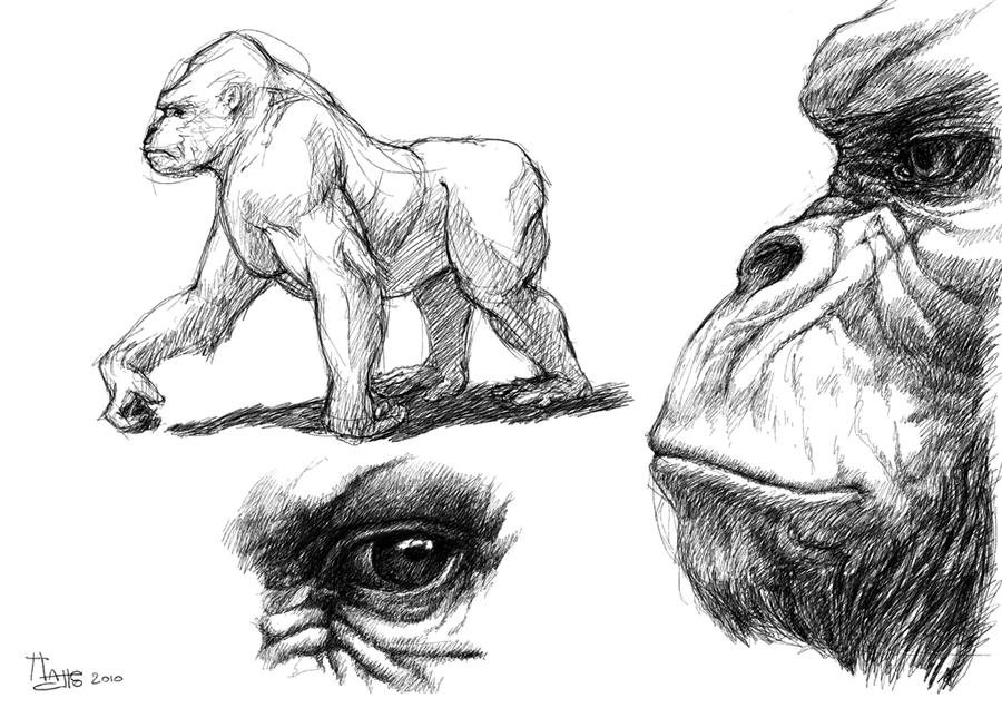 Angry Gorilla Drawing - photo#28