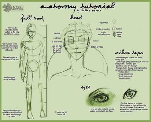 +Anatomy Tutorial+